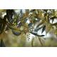 Confezione da 6 bottiglie di Olio extravergine di oliva ogliarola Karpene da 0,50 Litri