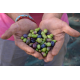 Natives Olivenöl Extra : Angebot , Förderung, Kostenlose Versand, Qualität