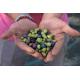 Natives Olivenöl extra : Angebot 40 Liter, kostenlose Versand in Italien