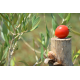 Confezione da 12 vasetti di passata di pomodoro fischetto